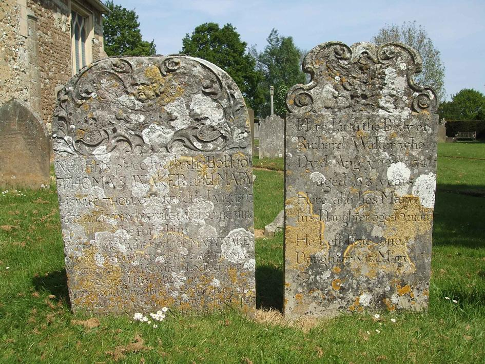 Limestone headstones with golden and grey crustose lichens